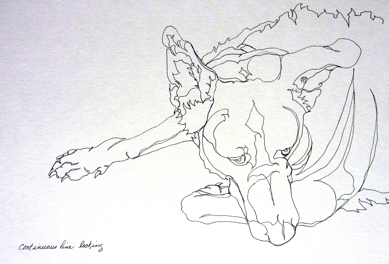 Contour Line Drawing Dog : Single line contour drawing footwear design consulting