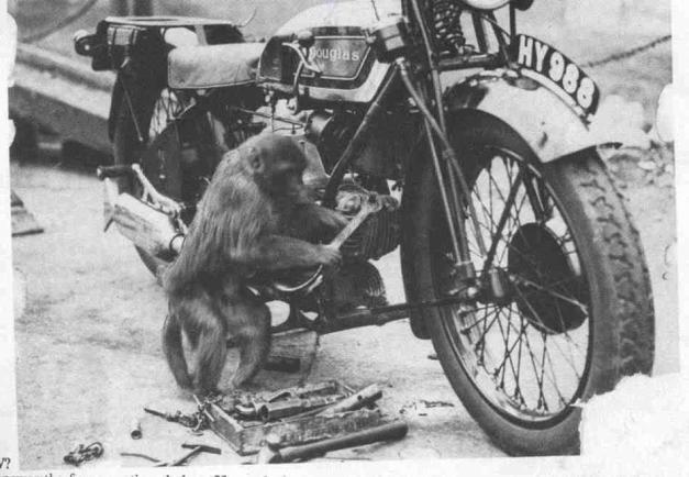 Douglas Monkey
