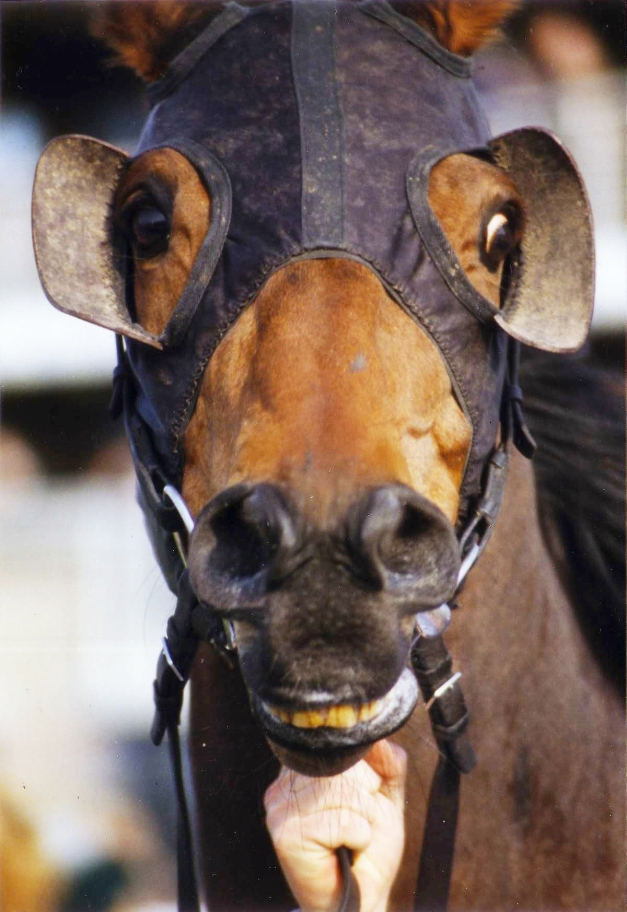 Race Horse Crop Bright