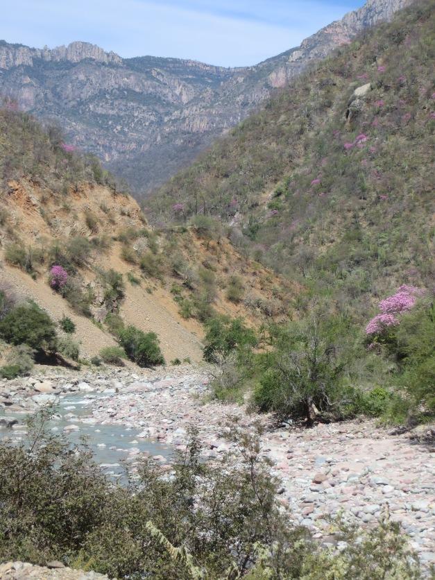 Huaraches, tarahumara, raramuri, born to run
